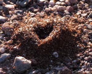 hive mind love